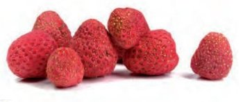 Erdbeeren Rot (60g)