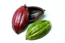 @ Kakaofrucht-Halbschalen bitter groß (8 Stk)